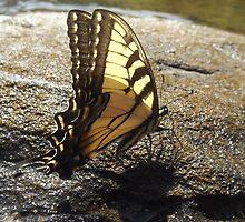 Monarch @ Audra by Dalton Sayre