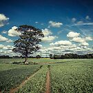 Rainhill Landscape by AndrewBerry