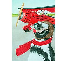 Penguin with a Plane Photographic Print