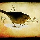 Blackbird under the feeding table by steppeland