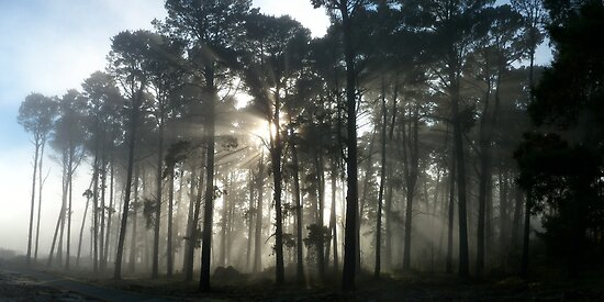Foggy Forest by Tim Coleman