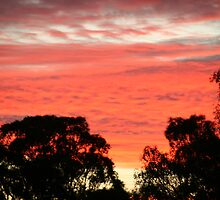 Auburn sunset above the tree-tops, S.A. by elphonline