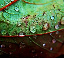 Rain Drop by pb-photography