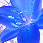 Trippy Blue Lilly by VixenFirepaw