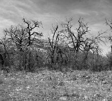 Wichita Mountains by Mickey Harkins