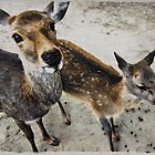 Deer Friends - Moku Hanga by GryffinDesigns
