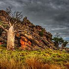 On the Windjana Gorge Rd - Kimberley WA by Ian English