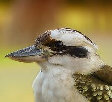 Kookaburra 001 by kevin chippindall