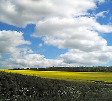 A Wolds view by Yorkspalette