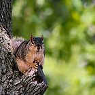 Relaxing Squirrel by Keala