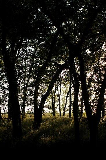 Haunting Shadows by Carla Wick/Jandelle Petters
