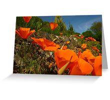 Californian Poppies Greeting Card
