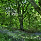 Billinge Woods Bluebells by inkedsandra