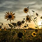 Sundown Flowers by Randy Turnbow