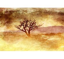 Tree At Dusk in Waikoloa Revisited Photographic Print