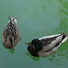 Chatty Ducks by Marie Van Schie
