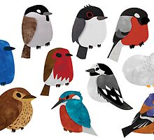 Bird Breeds by Claire Stamper