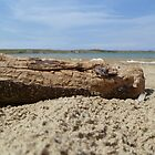 Driftwood by Vicki Spindler (VHS Photography)