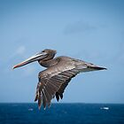 Pelican by Ralph Goldsmith