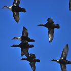 dunters in flight by NordicBlackbird