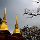 Golden Chedi at Wat Pra Doi Tung by Duane Bigsby