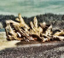 Driftwood on beach by brianstjohn