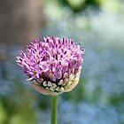 Allium by Linda  Makiej