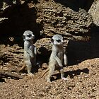 Baby Meerkats Exploring Their World by Margaret Saheed