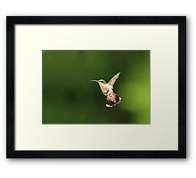 Humming Framed Print