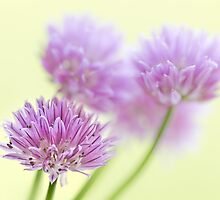 Chives by Geoff Carpenter