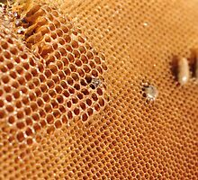 Hexagonal Honey Home by Ian Mitchell