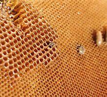 Hexagonal Honey Home by Ian Mitchell