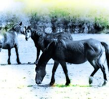Only The Horses by StephenRphoto