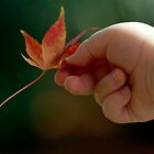 Autumn Baby by Clare Colins