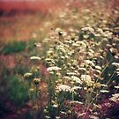 Queen Anne's Lace by FaireUnVoeu