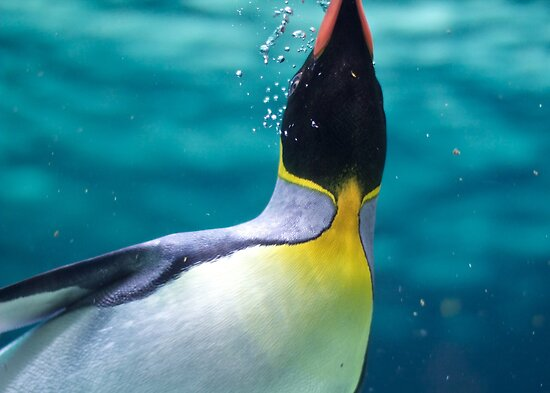 Penguin by Joanne Rinaldi
