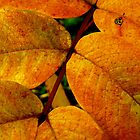 Yellow Leaves by Les Haines