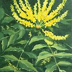 Mahonia by Lynne  Kirby