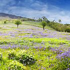 Bluebell Hillside Panorama by Richard McAleese
