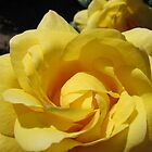 Golden Rose Macro by kathrynsgallery