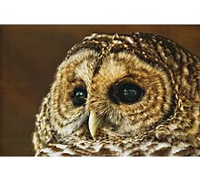 My What Big Eyes You Have Photographic Print