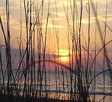 Beach Sunrise Through the Dune Grass  by acarpen
