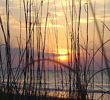 Beach Sunrise Through the Dune Grass  by acarpen