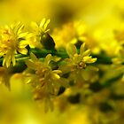 Yellow flowers by ScoobyMoo