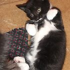 Kitten -(080613)- Digital photo/Fujifilm FinePix AX350 by paulramnora
