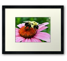~ Bumble Bee On A Cone Flower ~ Framed Print