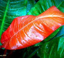 Leaf in Lomo by Thad Zajdowicz