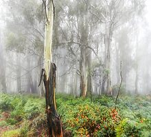 Mists Of Time - Laurel Hill NSW - The HDR Experience by Philip Johnson