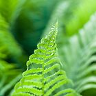 Fresh Fern by Arata