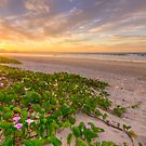 Flowering Sunset at Byron Bay by Cheryl Styles